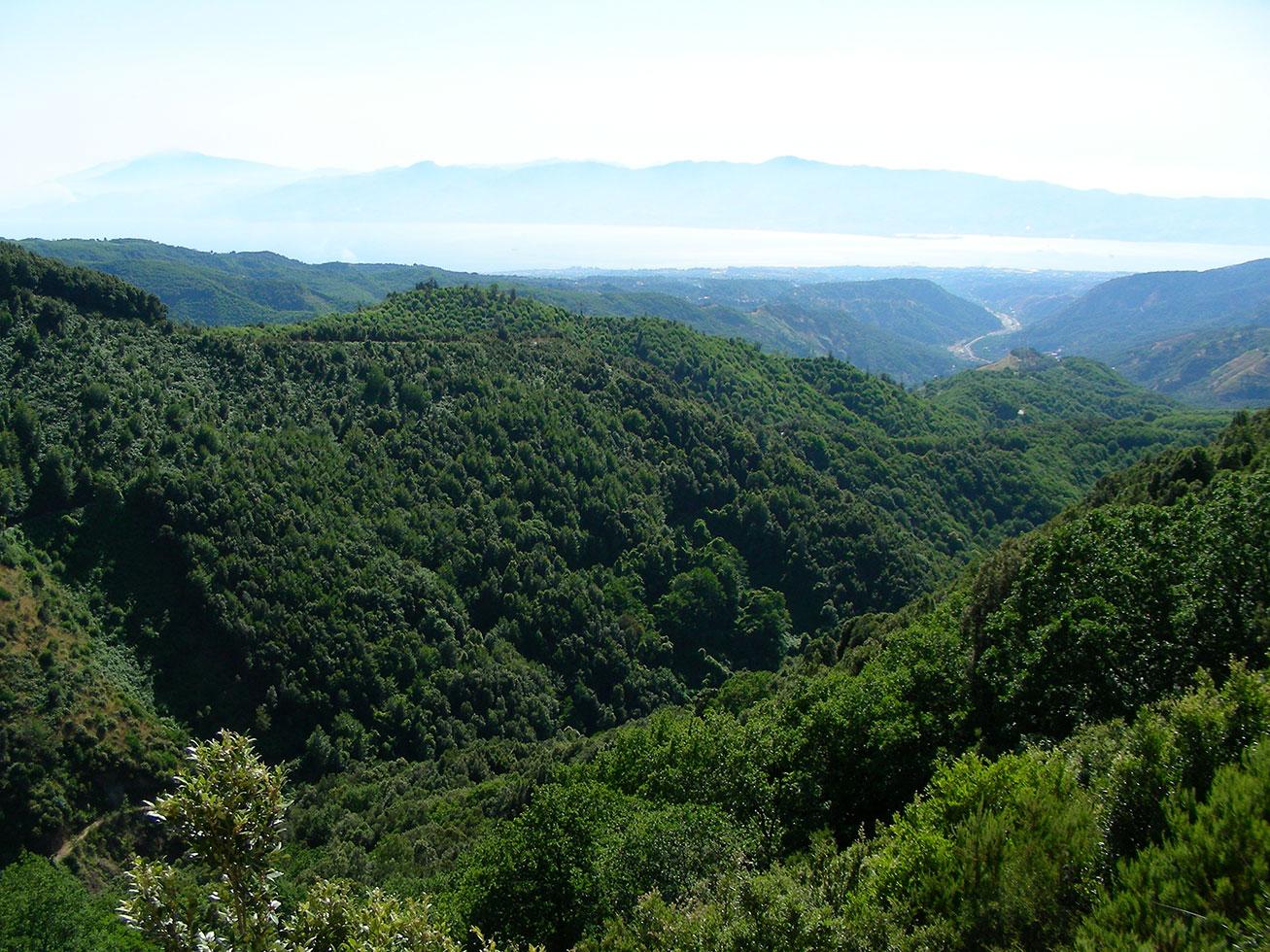La valle della fiumara di Gàllico decorre verso lo Stretto dai boschi di Gambàrie