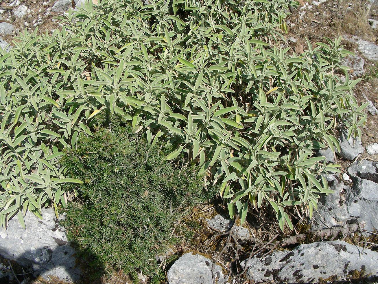 Flora montana a Cefalonia