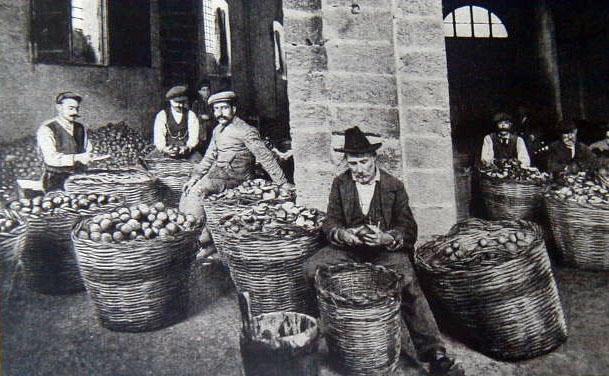 lavorazione antica del bergamotto