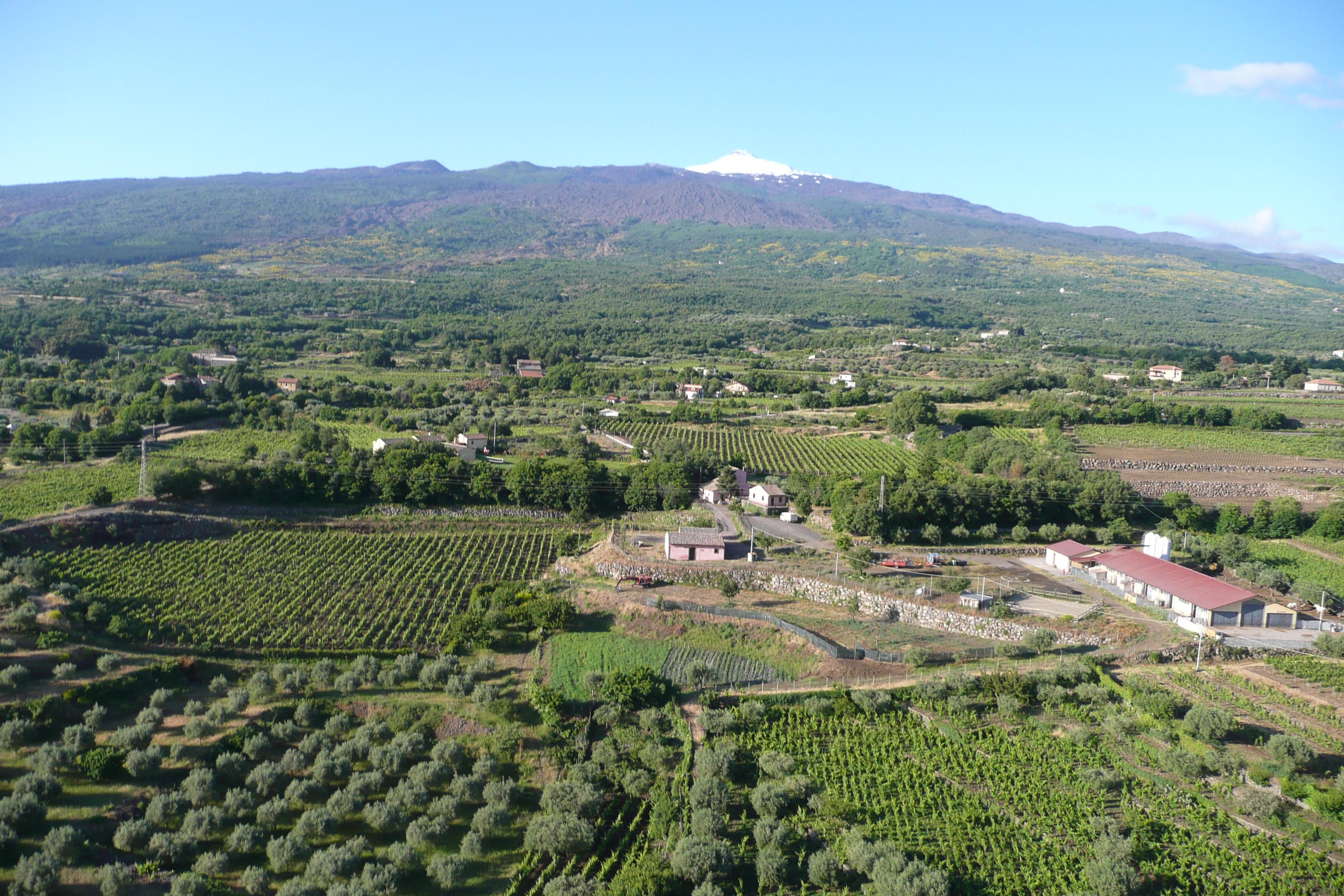 Ulivi e vigne a Randazzo, alle pendici del Vulcano