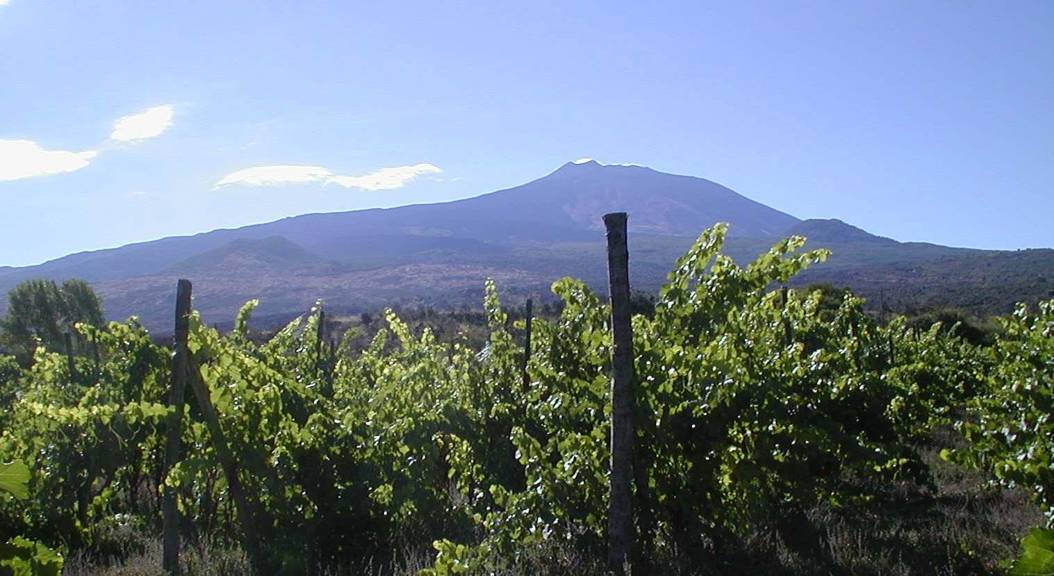 impianti di vite nerello mascalese sull'Etna