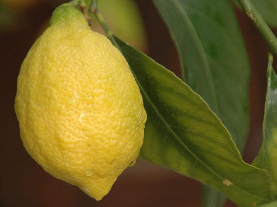 agr Limone1