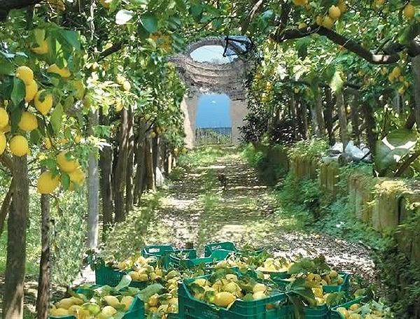 agrumeti storici, Amalfi