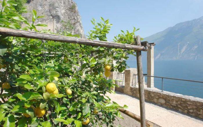 limoneti storici, Limone del Garda