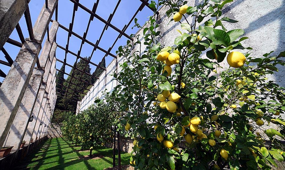 le limonaie del Garda
